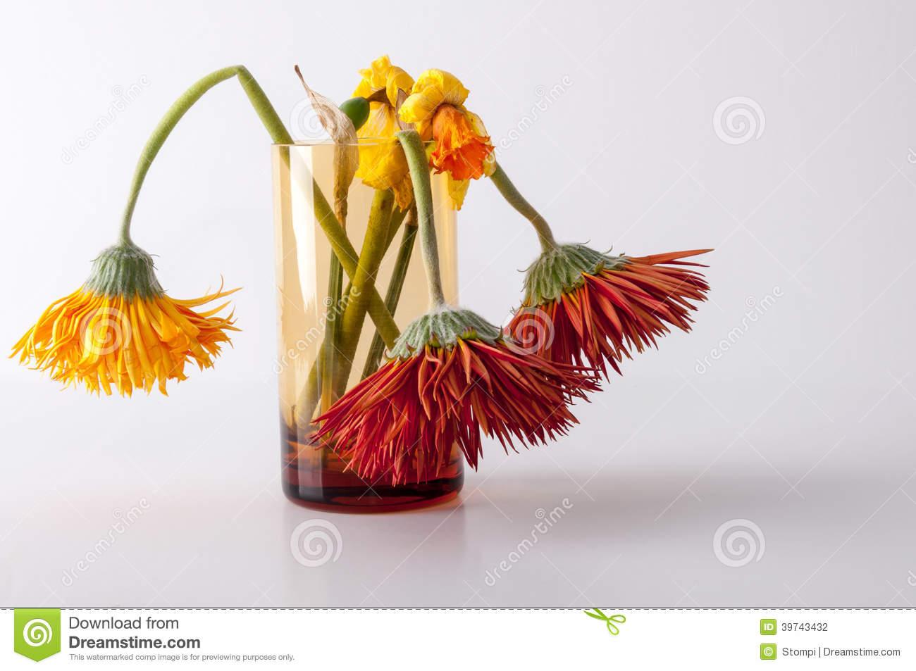 fiori-appassiti-39743432