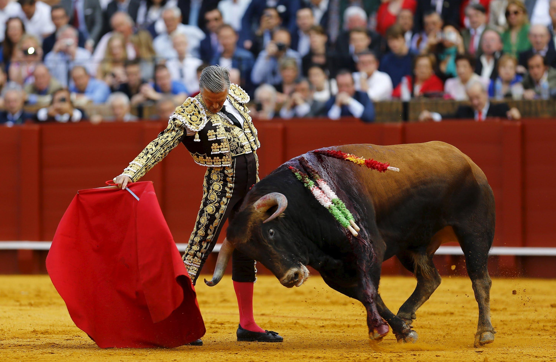 Palazzo dei Priori: per il Matador Giovanni che fatica nell' Arena… e che tori infuriati da matar….