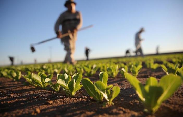 Viterbo, il futuro c'è già, è nell'agricoltura: cittapaese.it propone la nomina del decimo assessorato che se ne occupi
