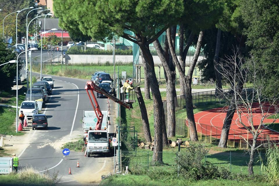 Viterbo, Santa Barbara: taglio di alberi al Camposcuola, come continuerà e per fare cosa?