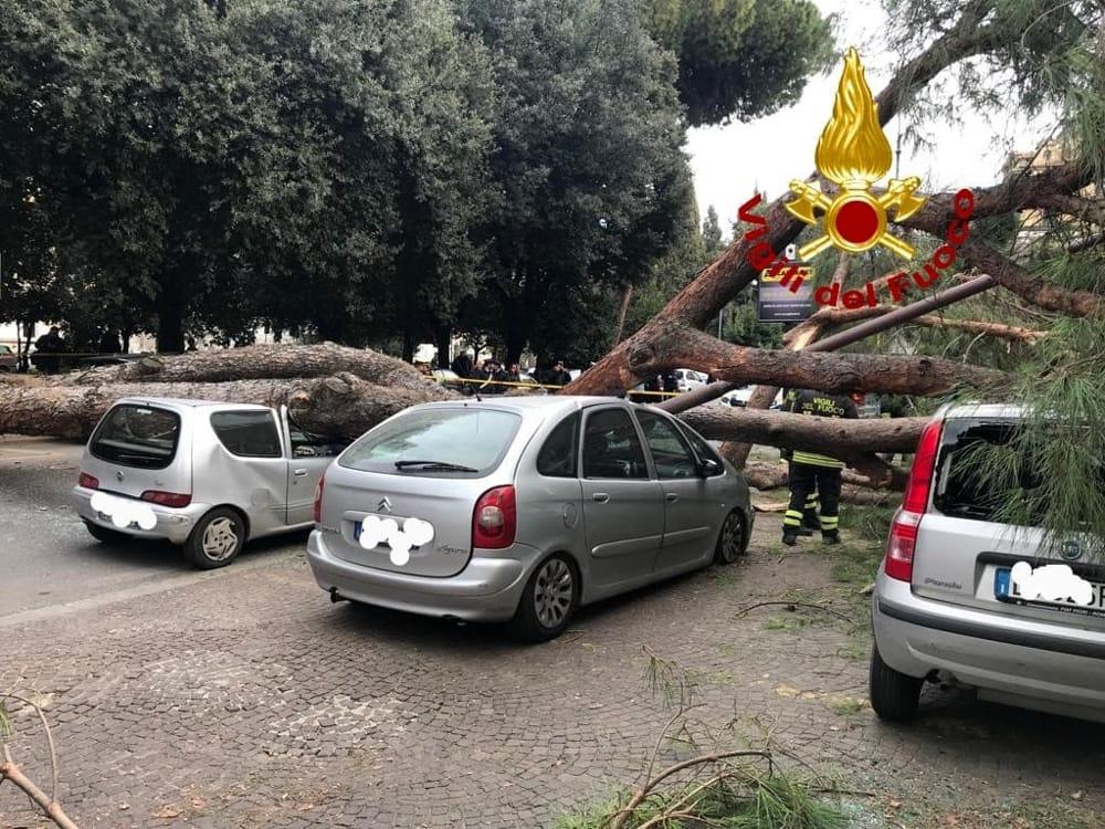 Cronaca di Roma: tragedia sfiorata a Prati, albero cade su 3 auto, due feriti gravi