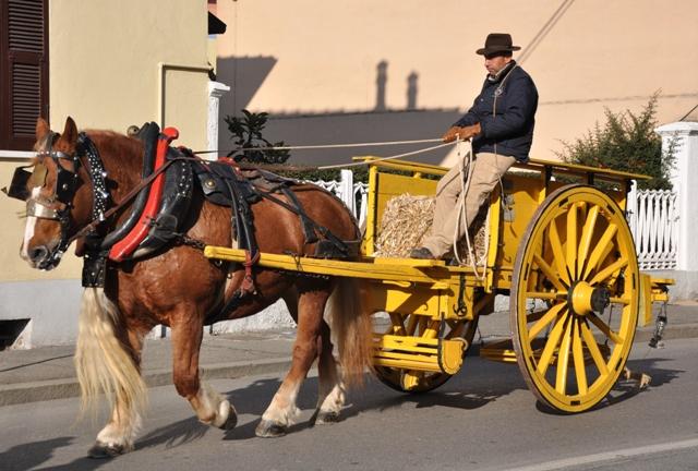 Viterbo, Comune: basta con le migliaia di carri a trazione animale che giravano per la città senza targa! Meno male che ci ha pensato la consigliera Salcini…