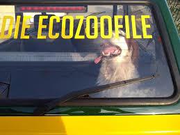 Montefiascone, bocconi avvelenati: le Guardie Ecozoofile in perlustrazione