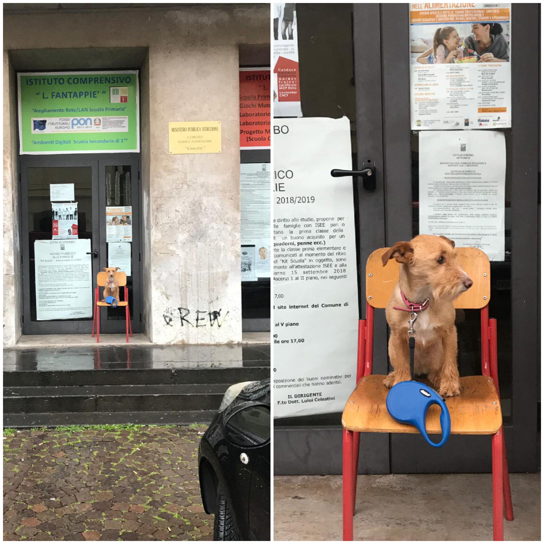 """Viterbo, Elezioni Europee: altro che politici, noi pubblichiamo solo la foto della """"Gioconda"""" che aspetta il suo padrone fuori dal seggio, sola come un cane"""