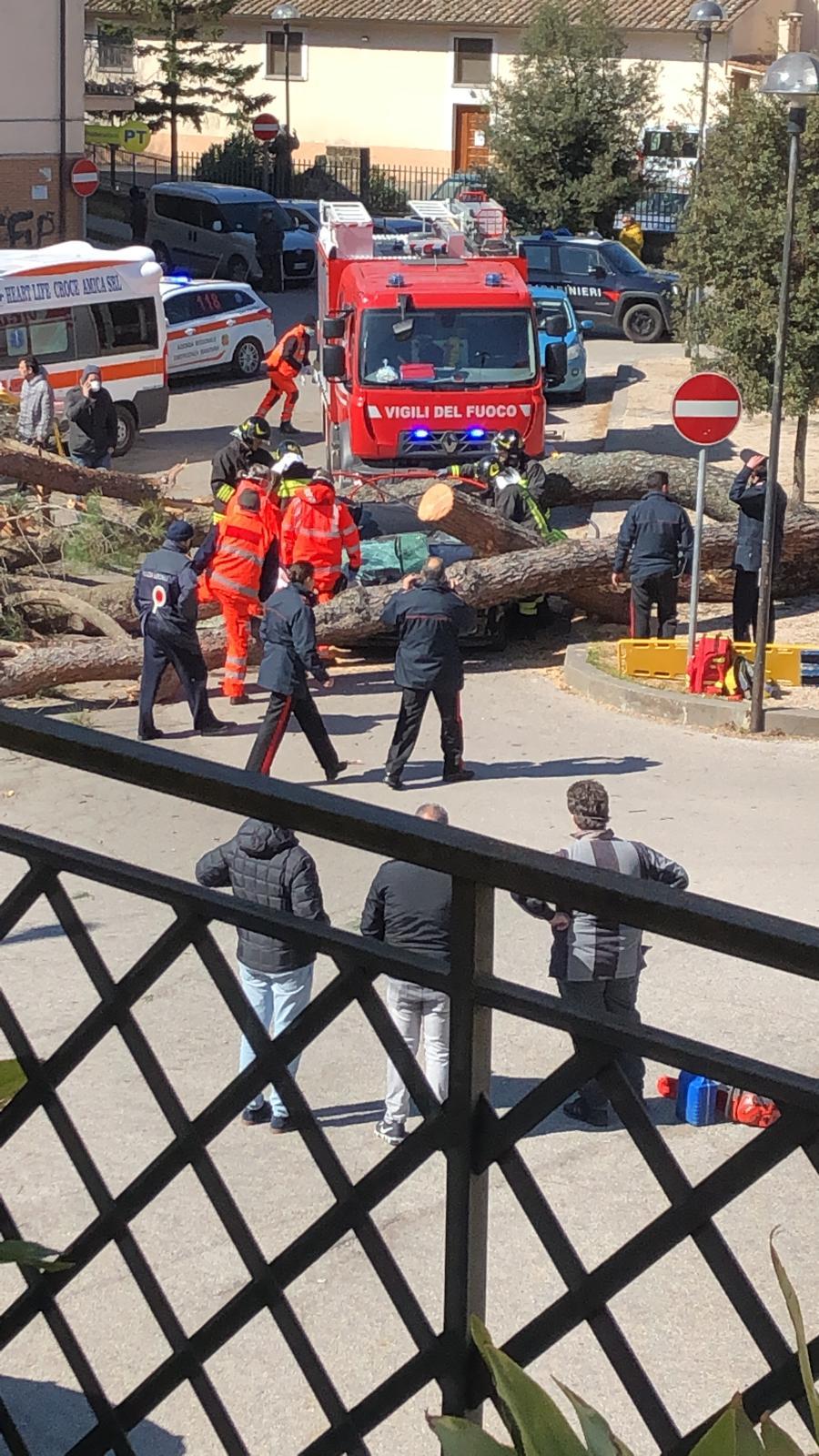 Allerta Meteo nel Lazio, in Tuscia cade un pino a Vetralla su un'auto