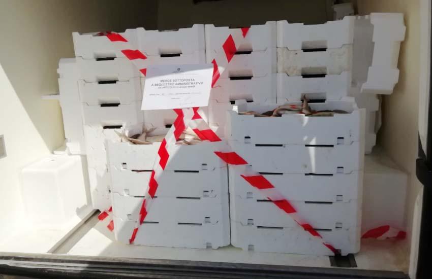 Viterbo, sequestrati a Chioggia 900 kg di pesce di ignota origine destinati ai ristoranti di Viterbo e provincia