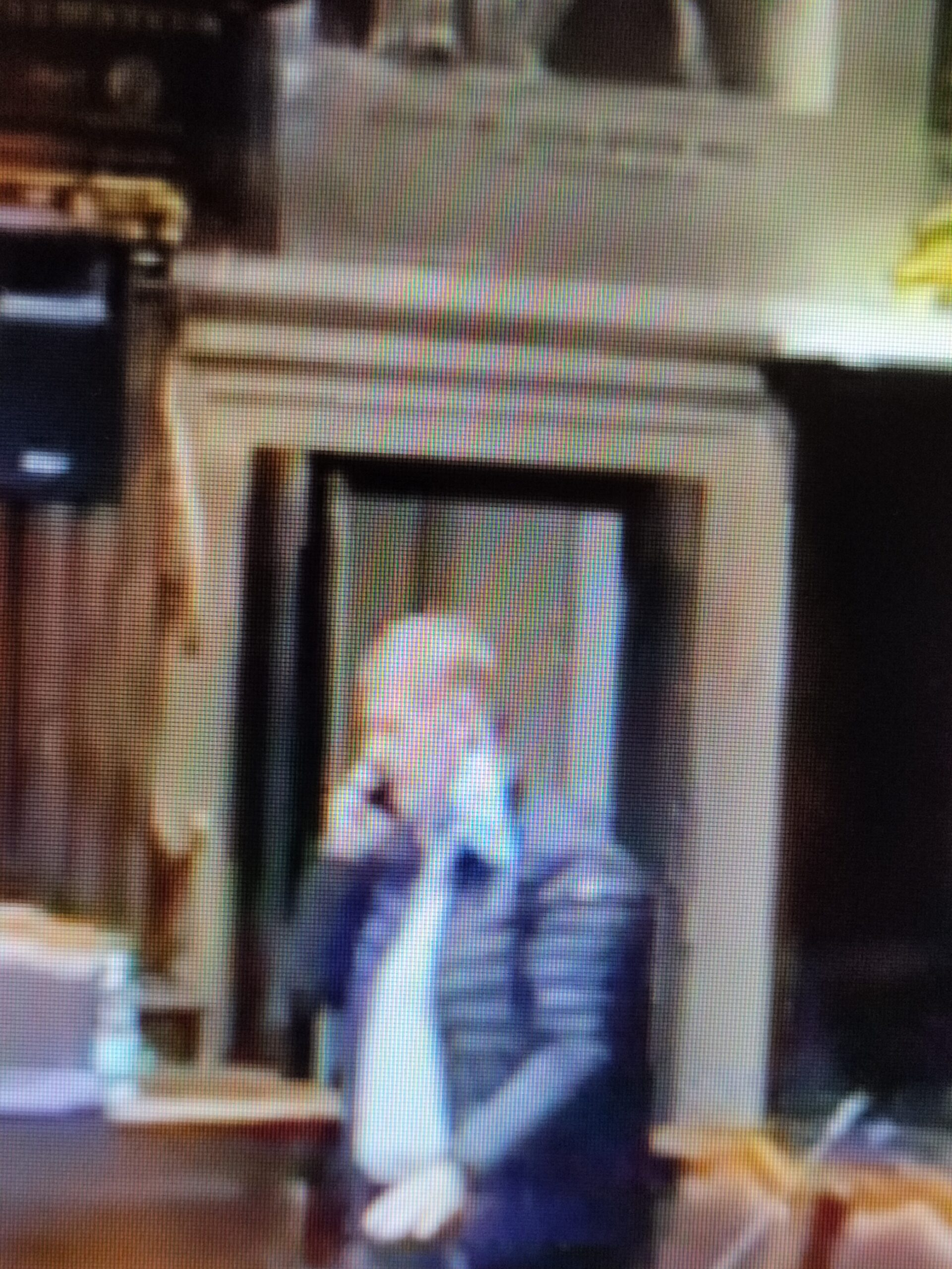 Viterbo, Comune, l'assessore Ubertini gira e parla per la sala del consiglio a mascherina abbassata, per il cdx il covid non è un'emergenza