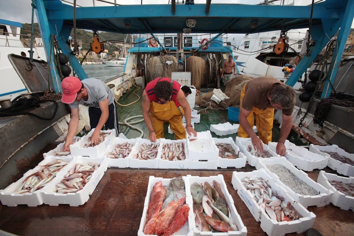 """Viterbo, """"A Sè, a Già, a Gianlù"""", non è il consiglio comunale, ma il mercato del pesce"""